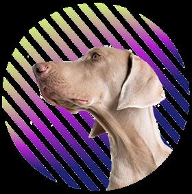 Logo De Mala e Dog