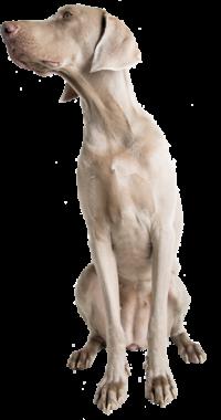 Jessy De Mala e Dog sem fundo
